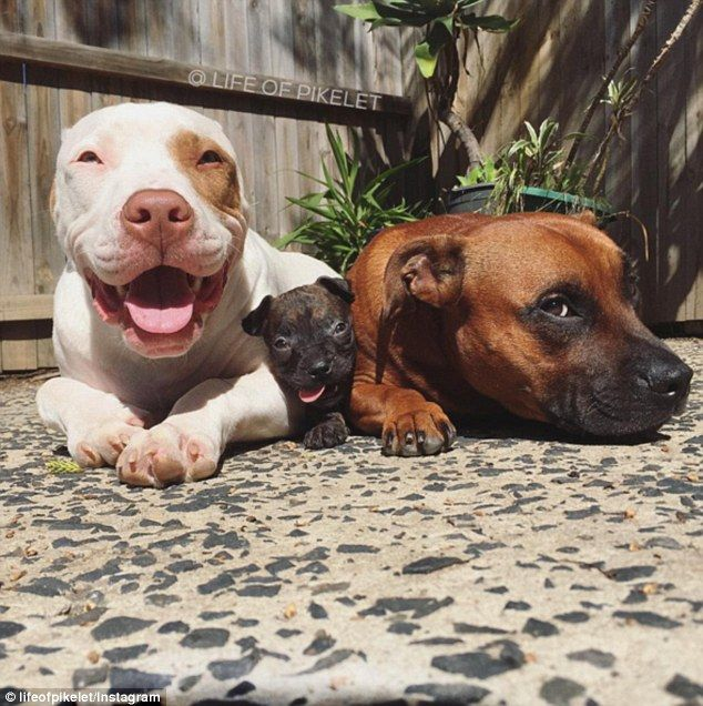 Puppies Once Abandoned Now Act As Foster Parents For Others Cute Animals Puppies Foster Puppies Puppies
