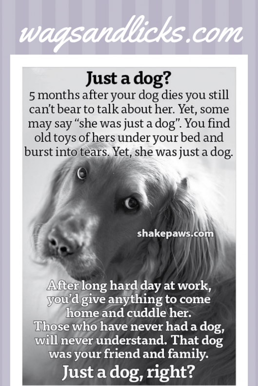 More Than Just A Dog Your Best Friend Confidante Protector Soul Mate Buddy And More And Do Dogs Go To Heaven Some Inform Dog Grief Pet Grief Dog Loss Quotes