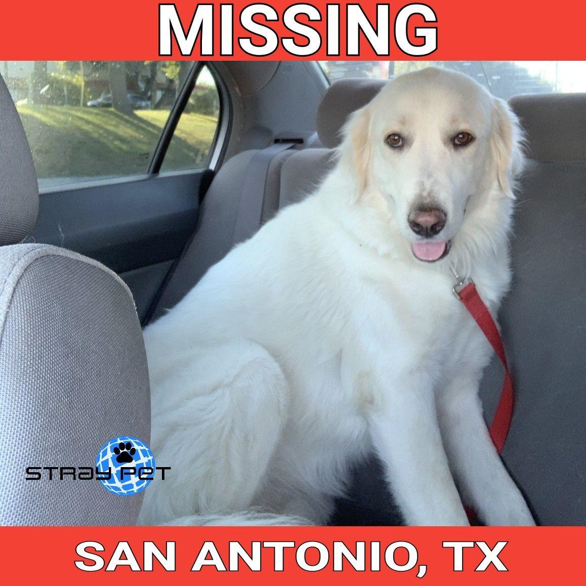 Alert Missing Dog in San Antonio San Antonio Area (78211