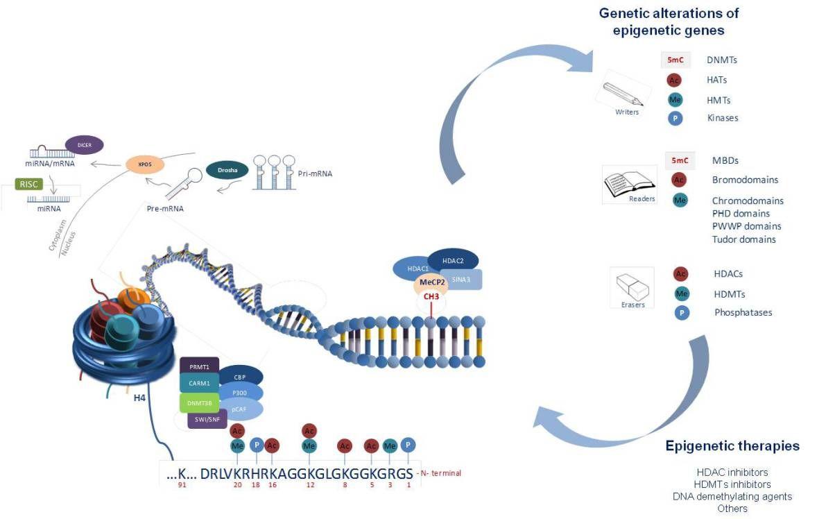 Genetics meets epigenetics in rare disorders – The Secrets