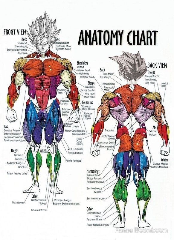 Women Bodybuilding Diagram - Wiring Diagram & Electricity Basics 101 •