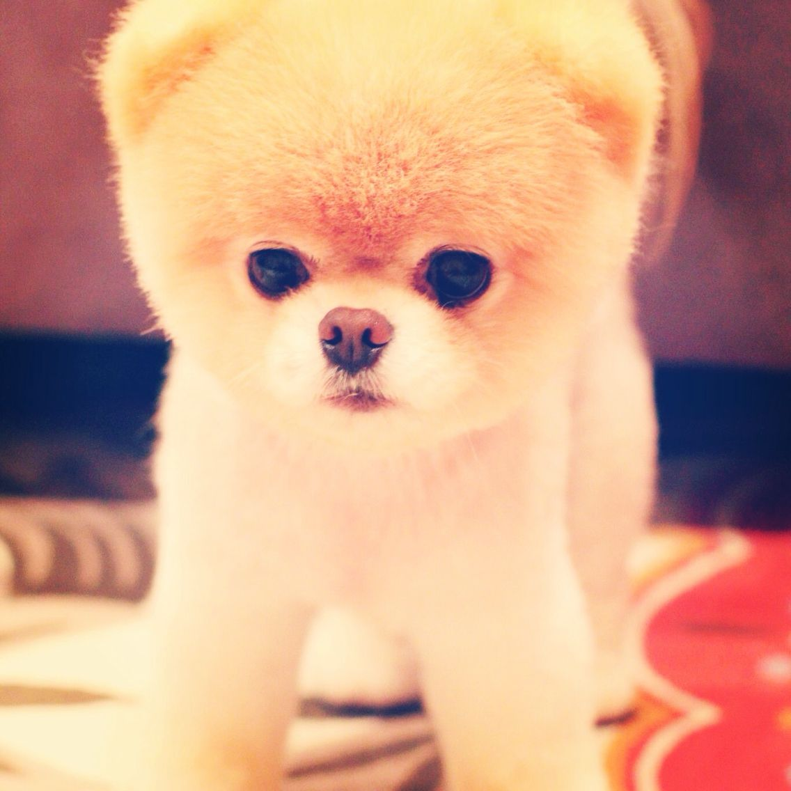 Fantastic Pinterest Chubby Adorable Dog - c487b91bd93b798fee2d8765036fd895  HD_617145  .jpg