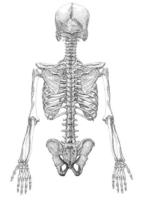 Pin de natalia mosquera pina en skull | Pinterest | Anatomía, Huesos ...