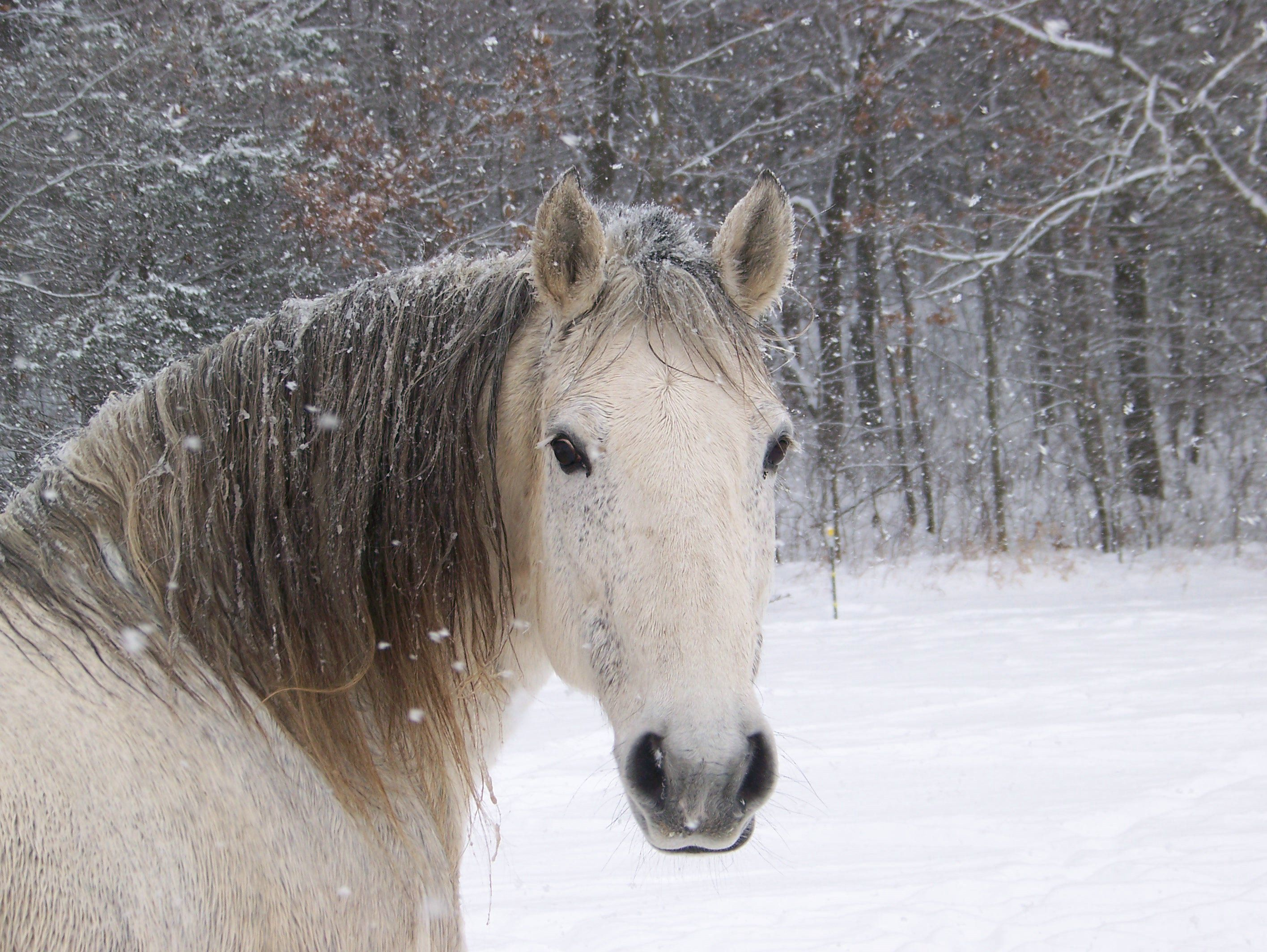Horses are really cute animals and remained faithful with
