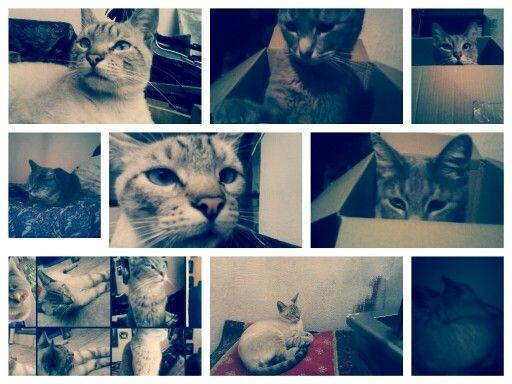 Gatitos y mas gatitos que mas puedo pedir