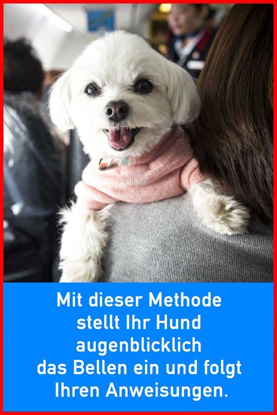 Photo of Con este método, su perro deja de ladrar inmediatamente y sigue sus instrucciones.