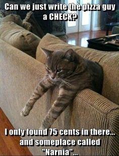 Pin On Cat Love
