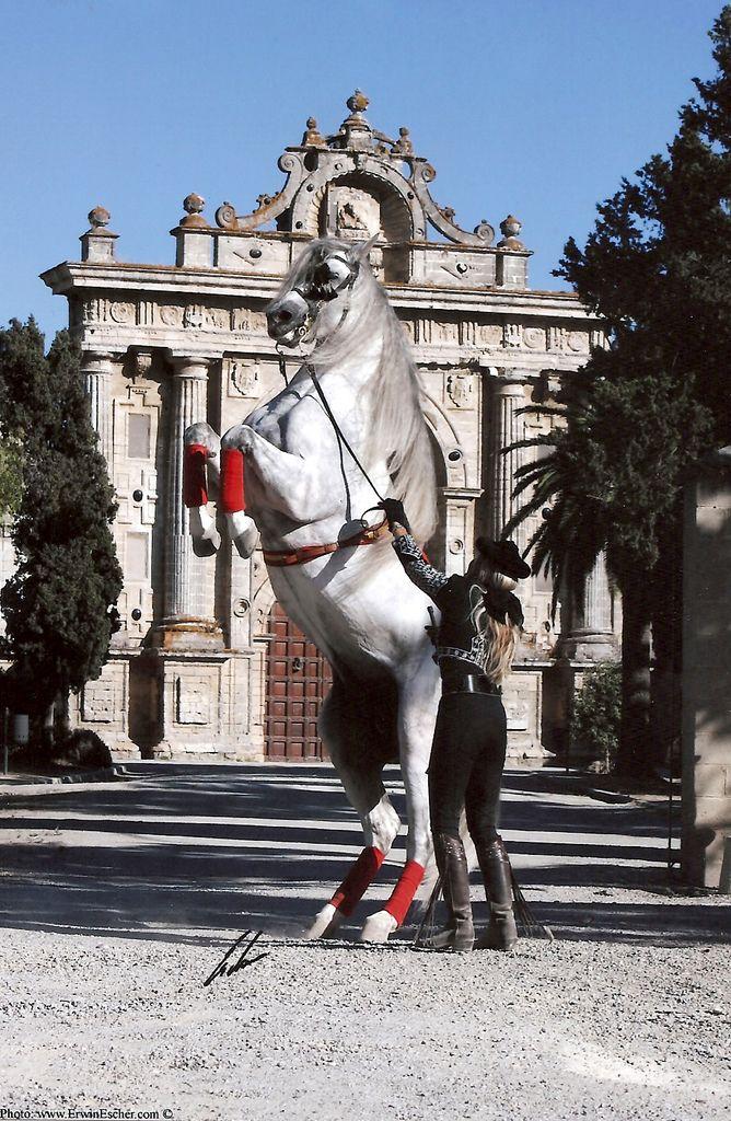 Hermoso vor dem 'La Cartuja' - Jerez de la Frontera