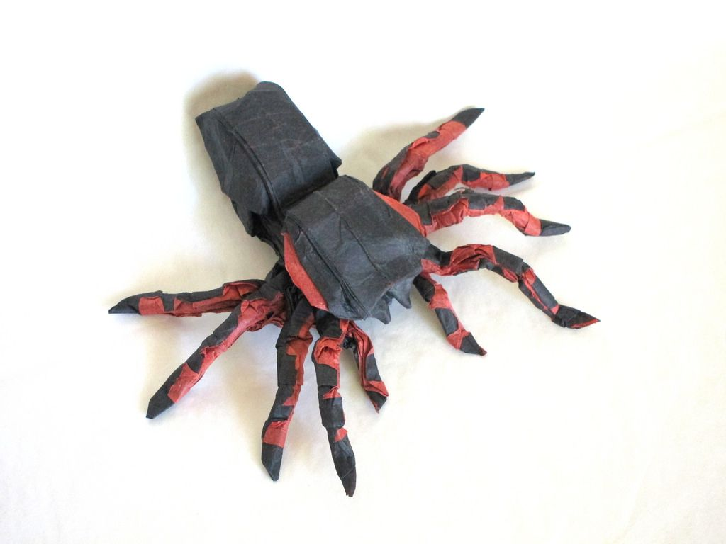 mexican red knee tarantulafoldingw.el.l | papiroflexia