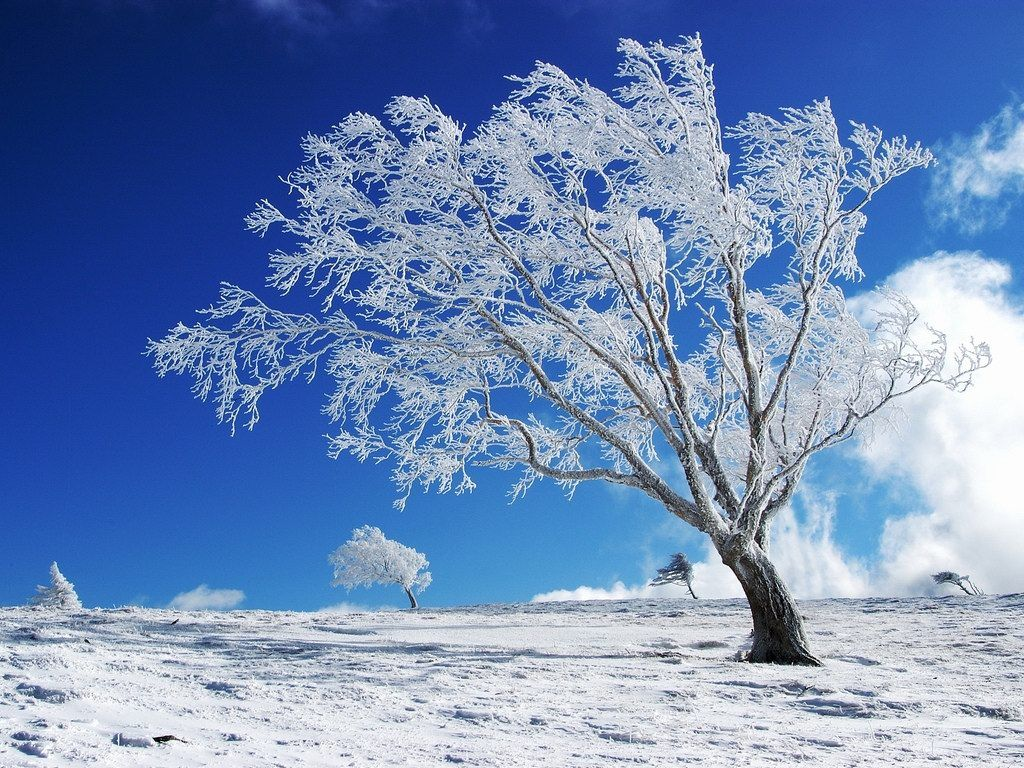 Winter Snow Trees Hiking Nature Landscape  HD POSTER