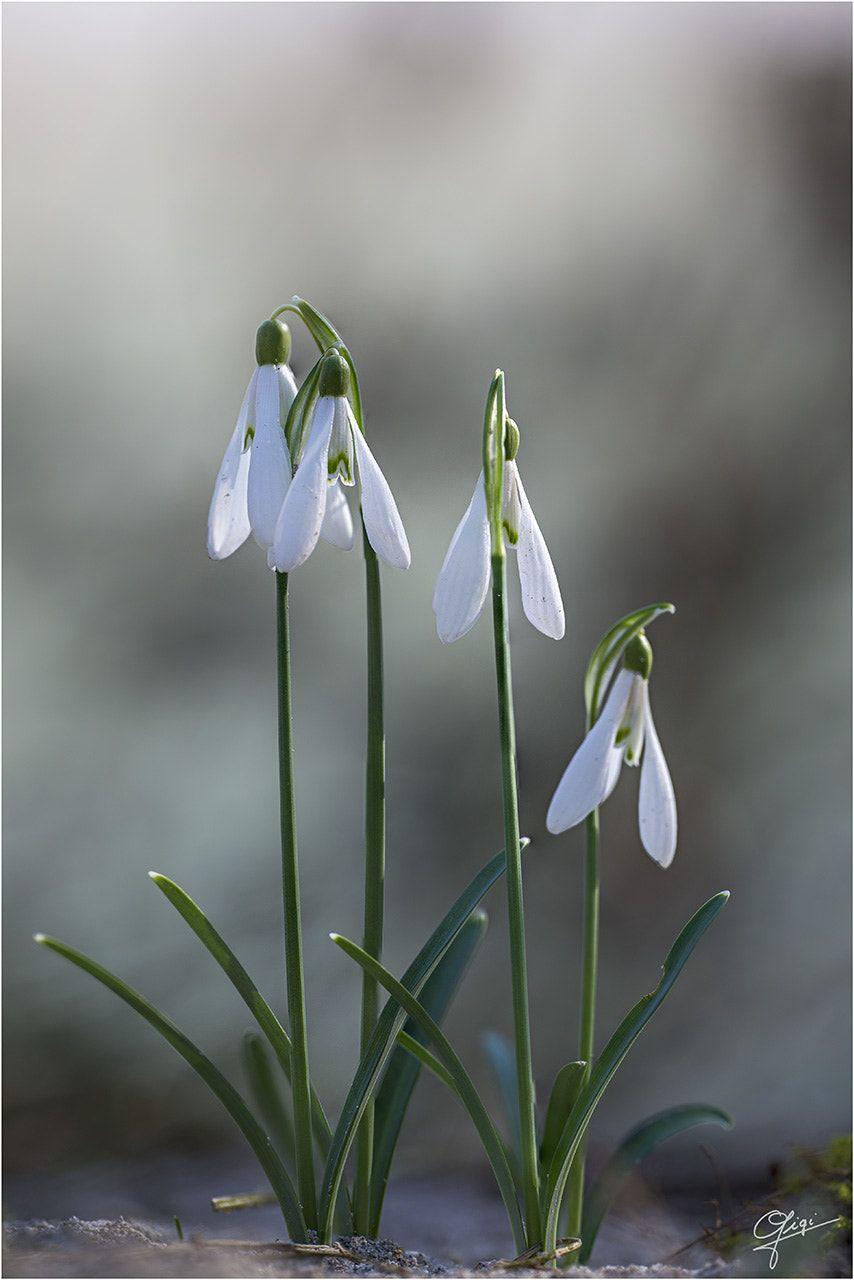 Pin Van Elis Bezek Op Flores Planten Seizoenen Bloemen