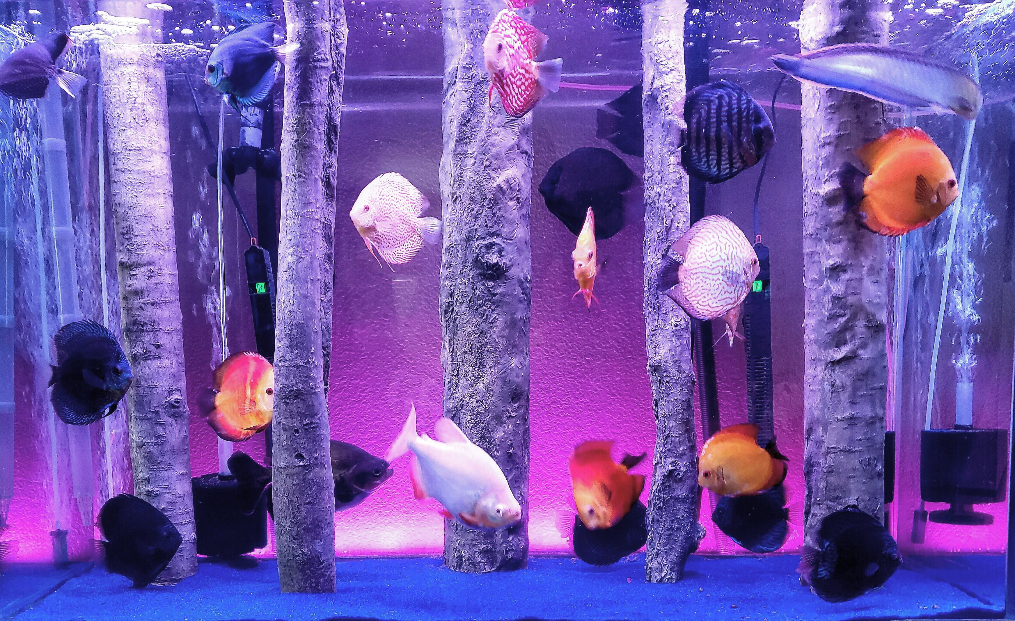Aquadecor Standing Logs In A Discus Fish Tank Aquadecor Aquascaping Malawicichlids Tanganyikacic Fish Tank Decorations Custom Aquarium Aquarium Backgrounds