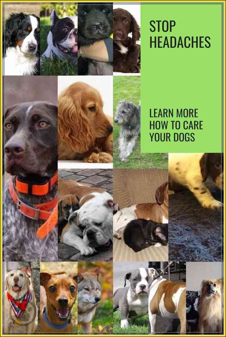 Stop The Headaches Learn More About Dog Care Dog Care Dogs