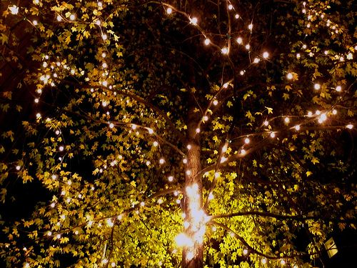 Lights In Trees. Home Design Ideas