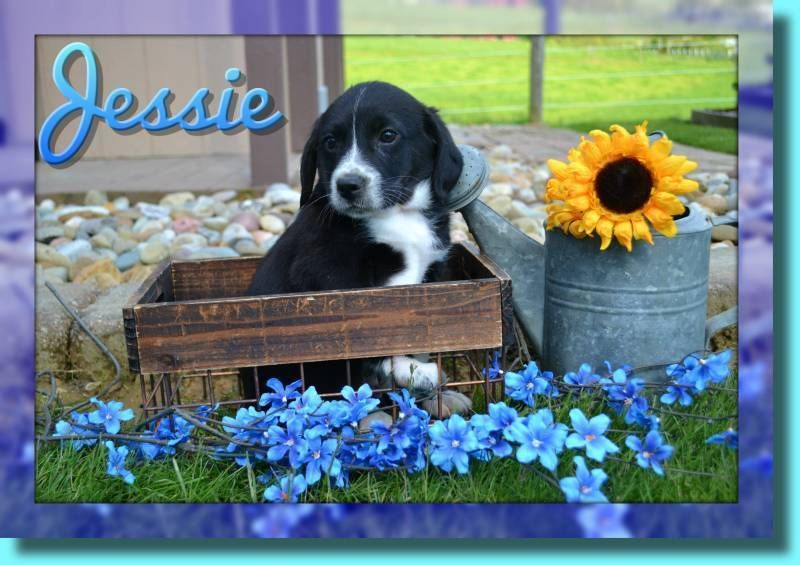Beagle mix puppies that doggy in the window that doggy