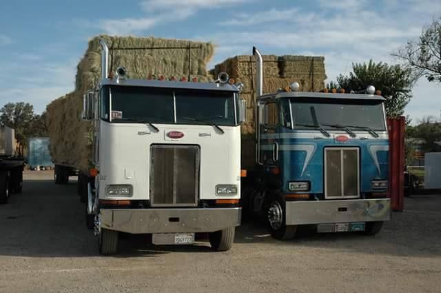 Peterbilt 362 hay trucks   Trucks and Truck-Tractors Class 8