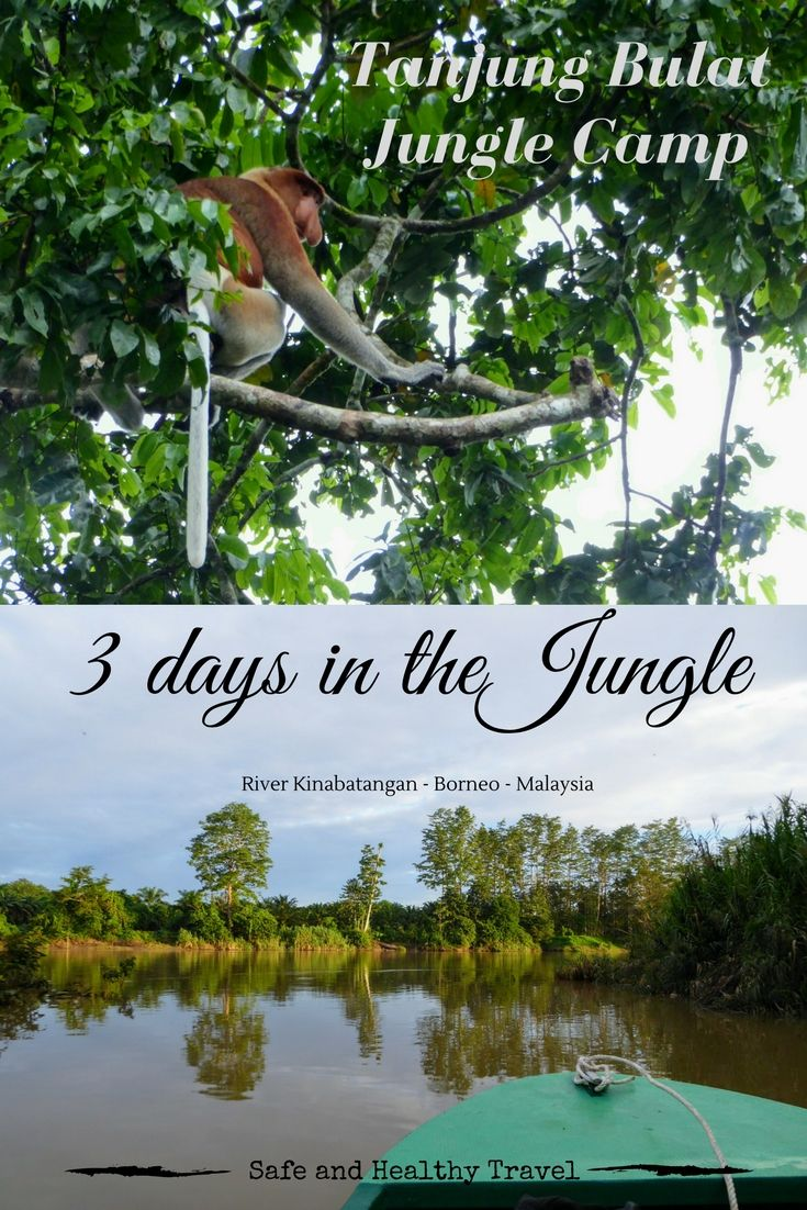 You want adventure right? Take a 3 days trip in the Jungle of Borneo and go explore the wildlife by Kinabatangan River Cruise and hiking right out of camp!