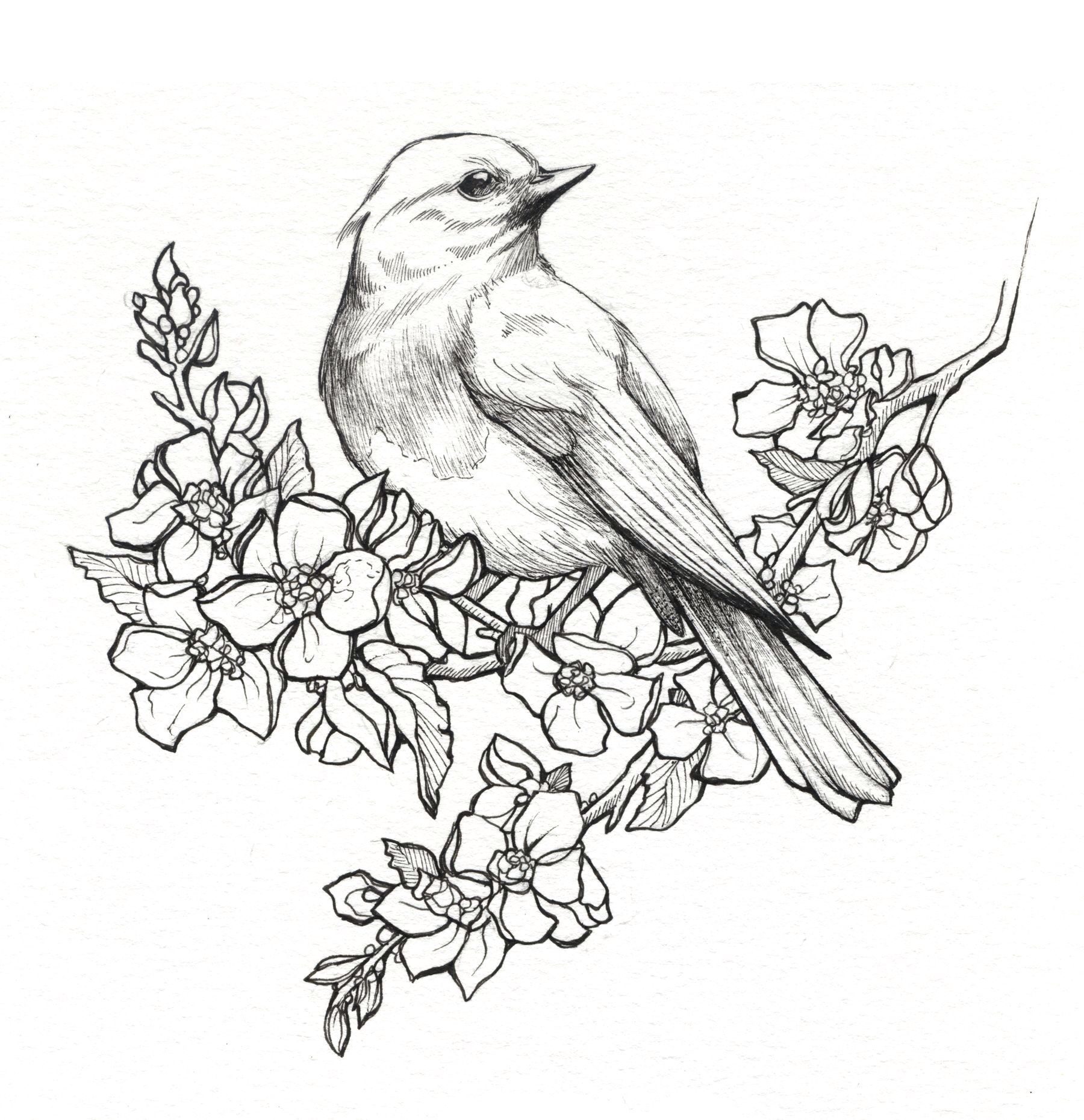 Line drawings of birds - Yahoo India Image Search results ...