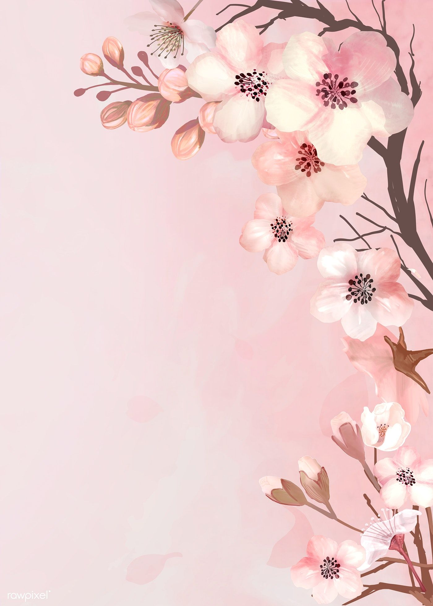 Download Premium Illustration Of Hand Drawn Cherry Blossoms On A Pink Cherry Blossom Wallpaper Cherry Blossom Background Pink Background