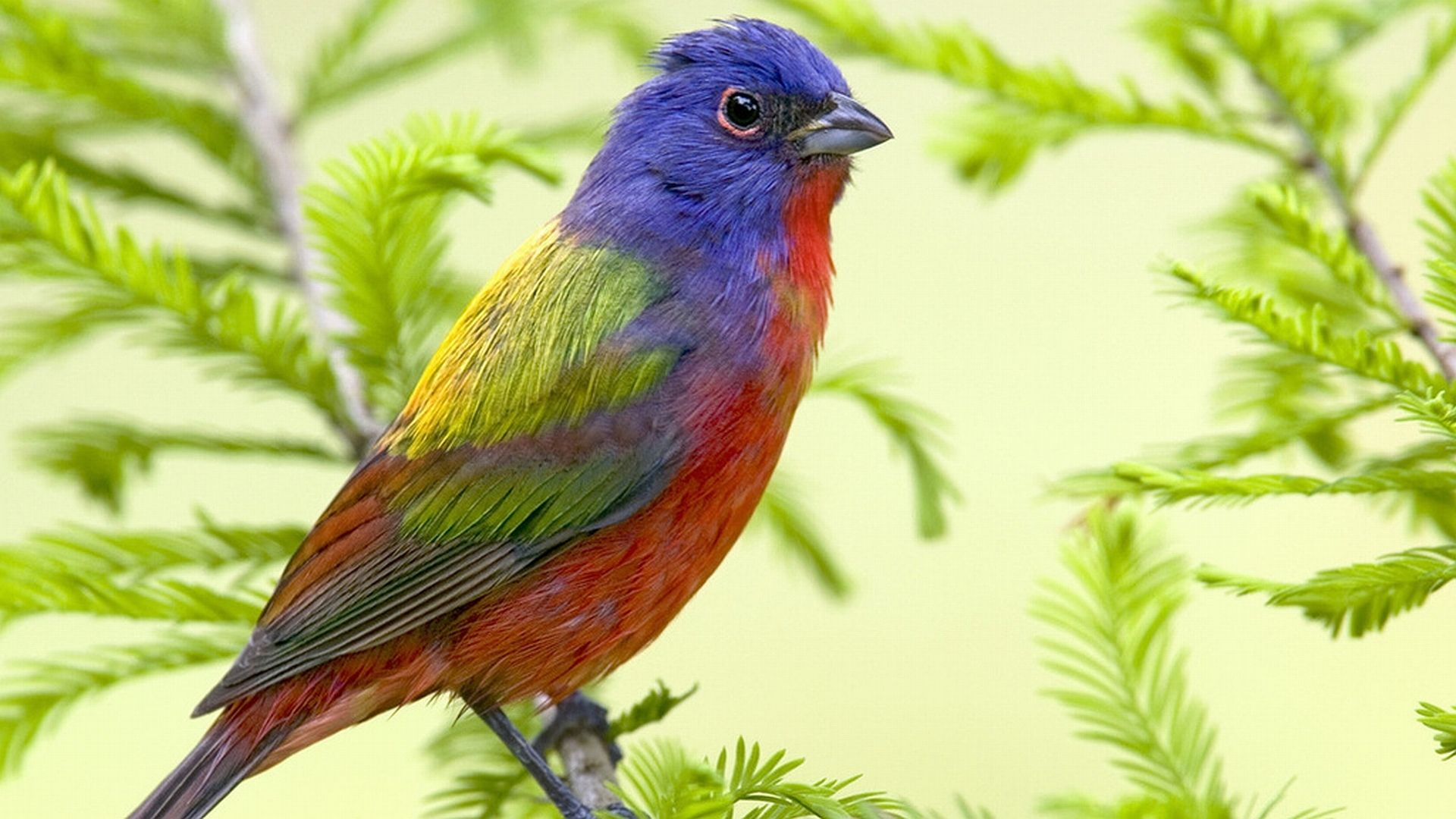 Animal Bird  Wallpaper