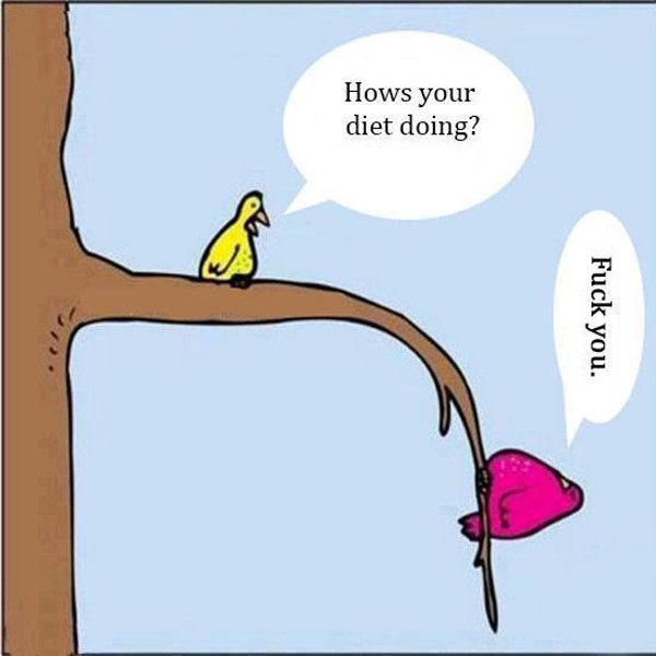 Hows Your Diet Going Bird Some Jokes
