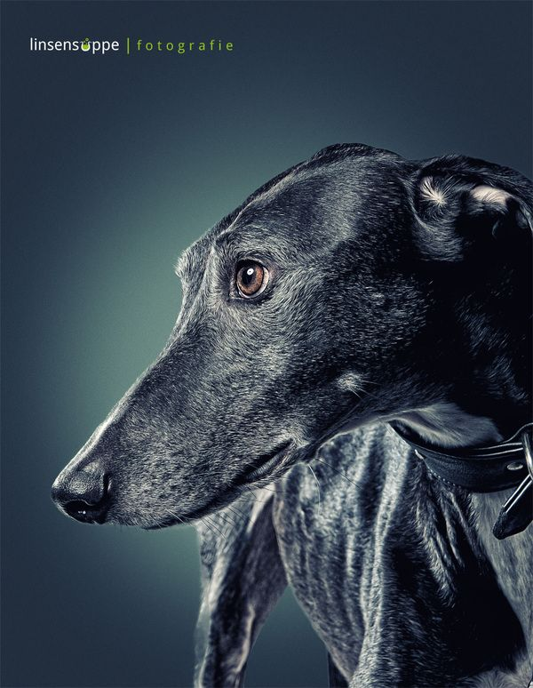 Fantastic Dog Portraits by Daniel Sadlowski....those beautiful eyes get me every time... miss you Dottie xx