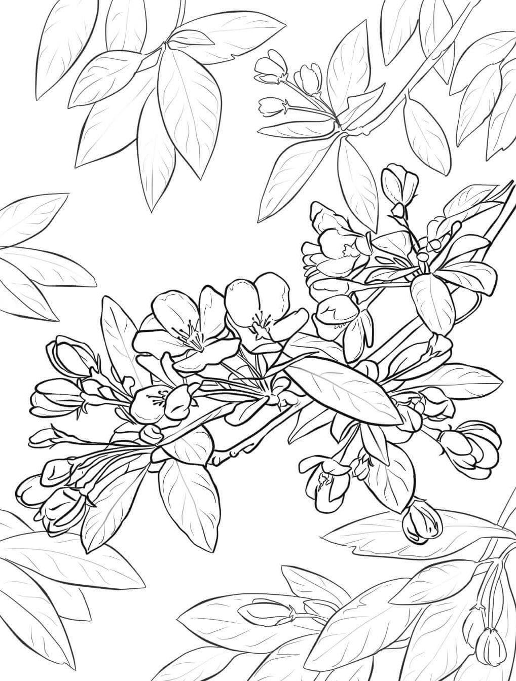Яблоня в цвету - razukrashki.com | printables | Pinterest | Cosas ...