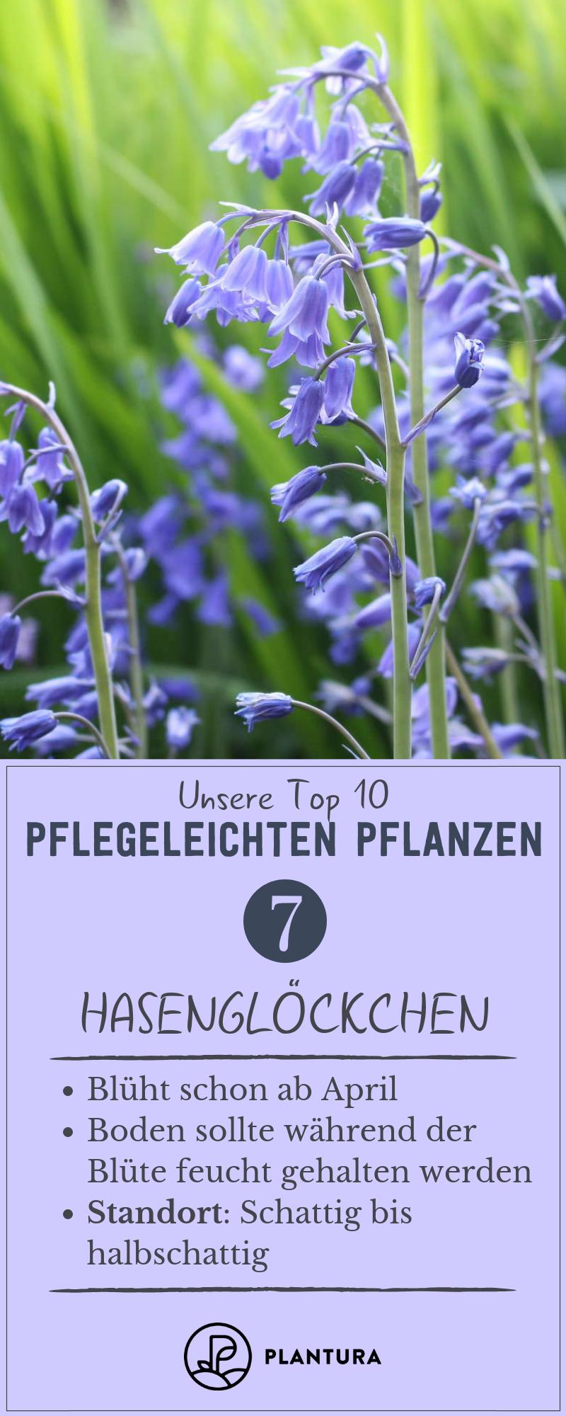 Pflegeleichte Gartenpflanzen: Die Top 10 für draußen - Plantura