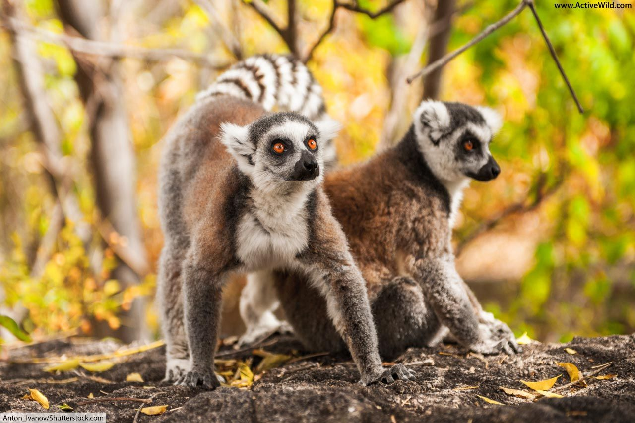 Rainforest Animals List With Pictures Facts Amp Links To