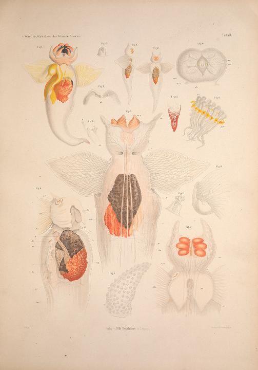 Die Wirbellosen des Weissen Meeres. Erster Band : - Biodiversity Heritage Library