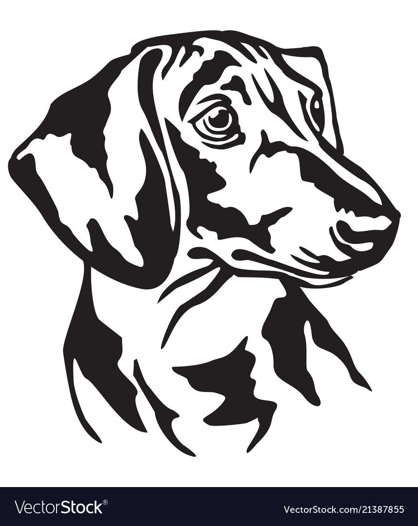 Decorative Portrait Of Dog Dachshund Royalty Free Vector Ad