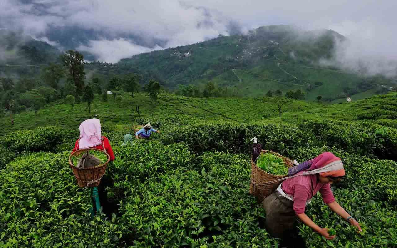 Best Holiday Package Booking In Assam Silchar Tea Garden