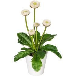 Photo of Künstliche Mini Bellies 5 Blüten H. 15cm creme 13 Blätter im Keramiktopf Gasper Gasper