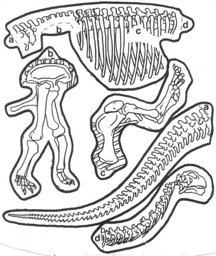 Kleurplaten Dino Skeletten.Kleurplaat Dino Skelet Google Zoeken Dinosaurussen