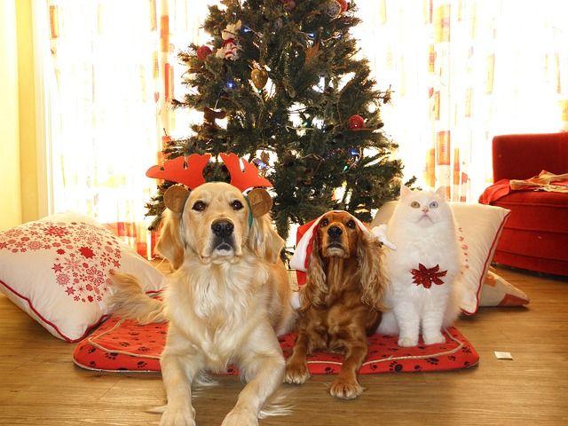 Pixabay의 무료 이미지 - 애완 동물, 크리스마스, 개, 고양이, 산타 클로스, 모자
