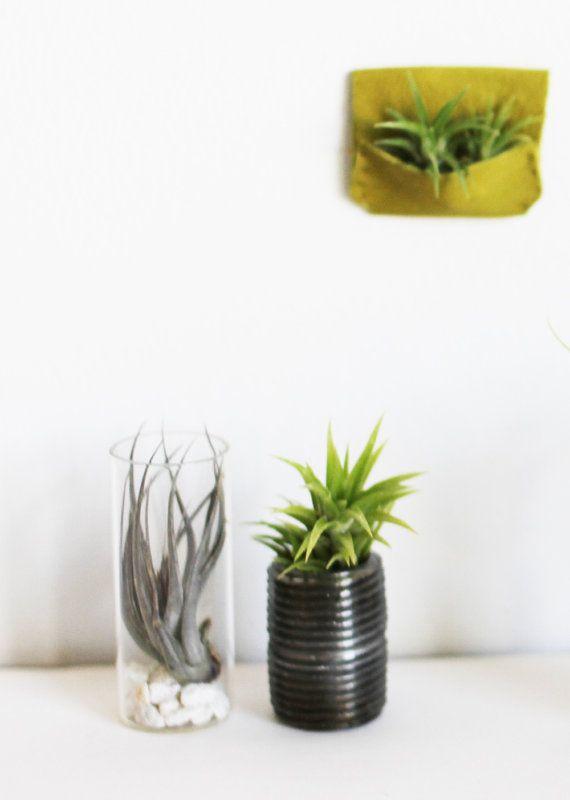 Miniature Air Plant Terrarium