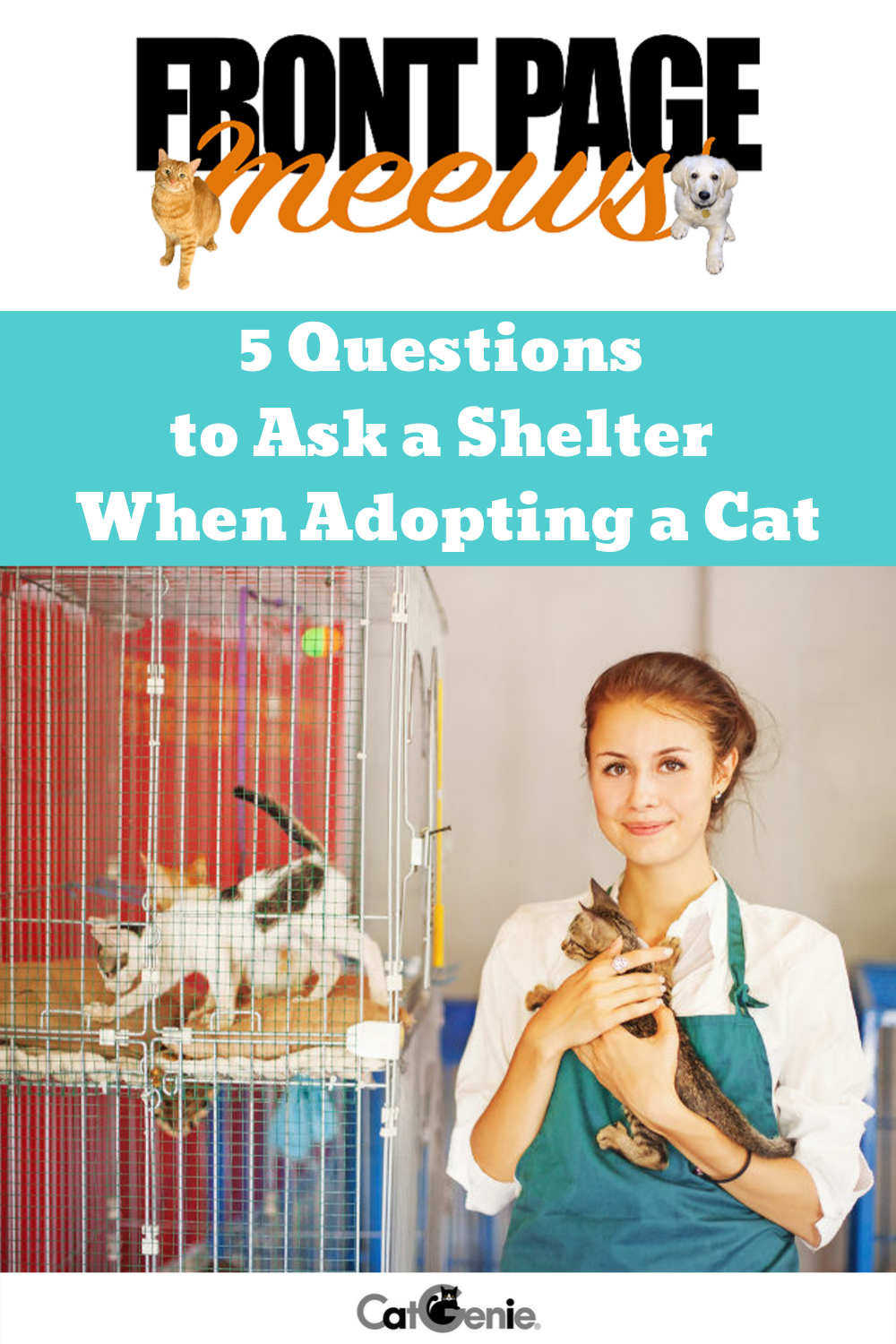 5 Questions to Ask a Shelter When Adopting a Cat | This or ...