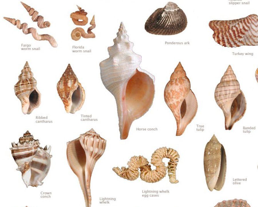 Best Beach In Sarasota For Shells