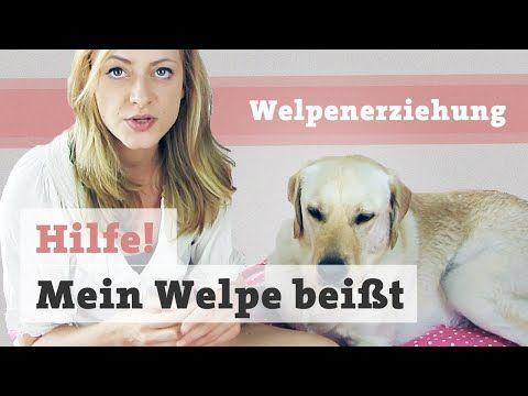 Welpe Beisst Welpen Beissen Zwicken Abgewohnen Hande Finger Fusse Beisshemmung Trainieren Youtube Welpen Hundewelpen Beissen
