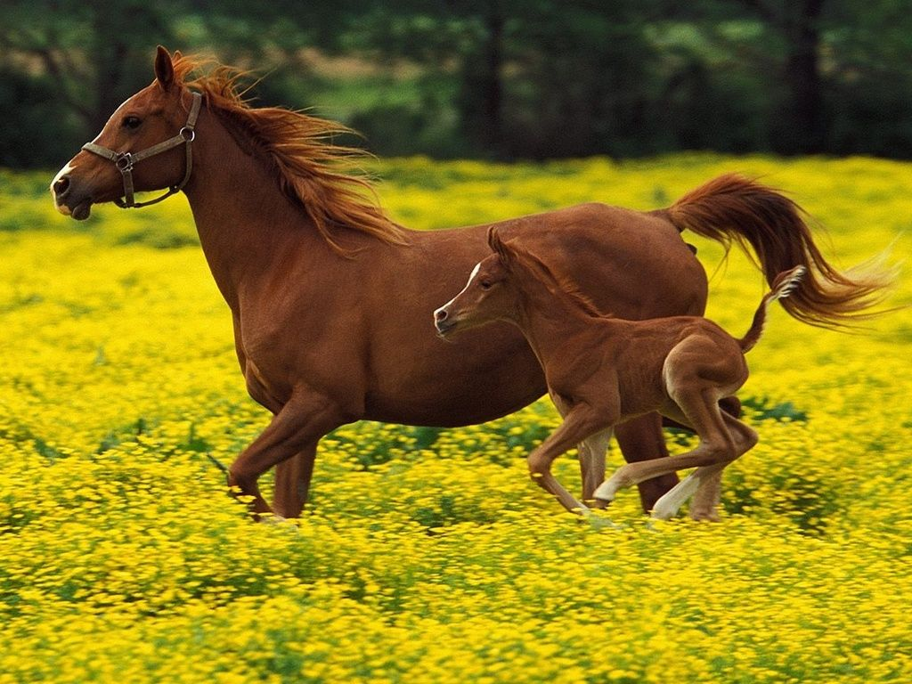 Spring time in the flowers for mom and foal | ~ Lovely ...