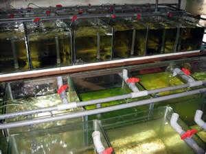 Freshwater Fish Raised on Florida Fish Farms