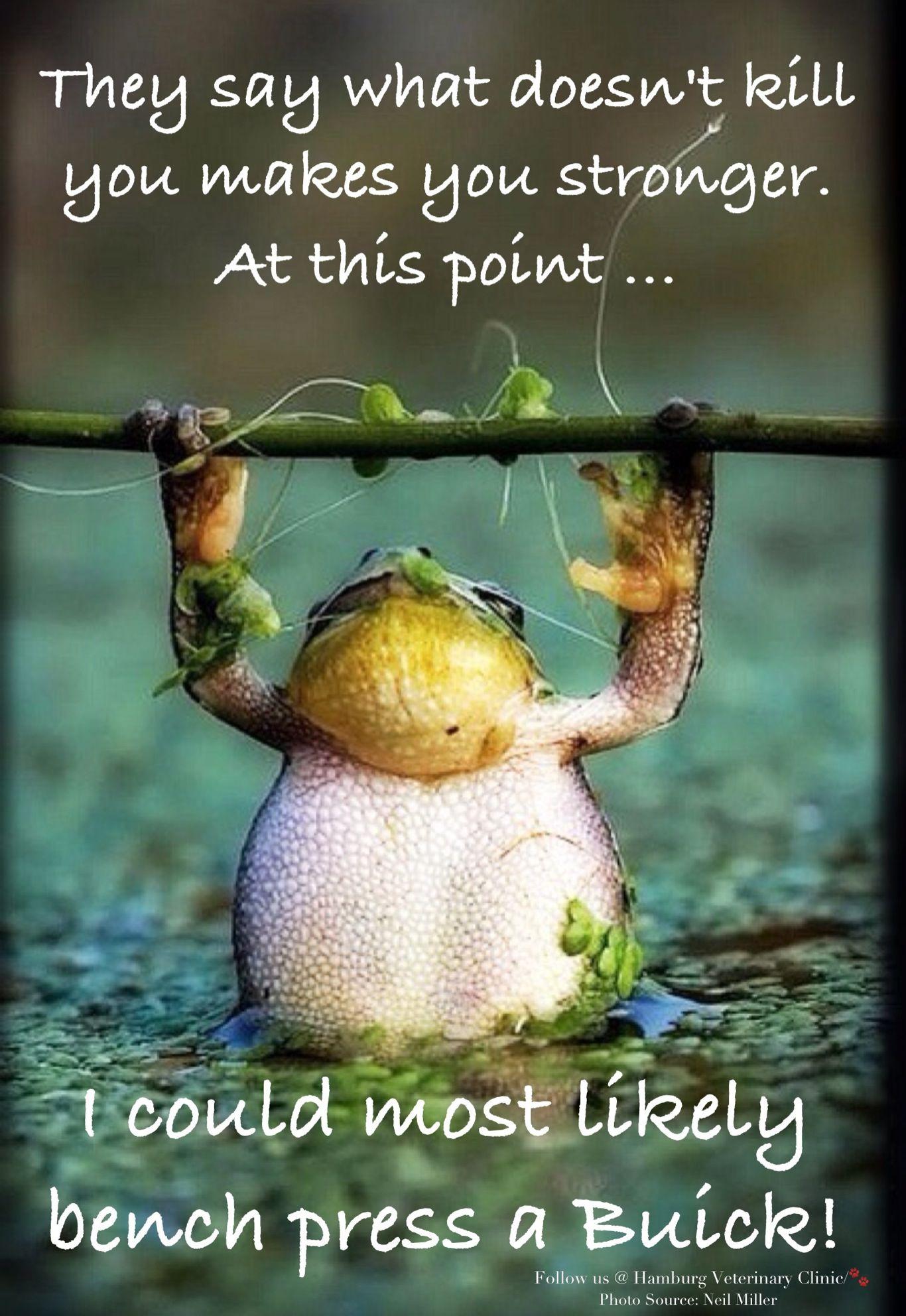 Monday humor  Tuesday Humor  Wednesday humor  strength  Keep going  Moti...