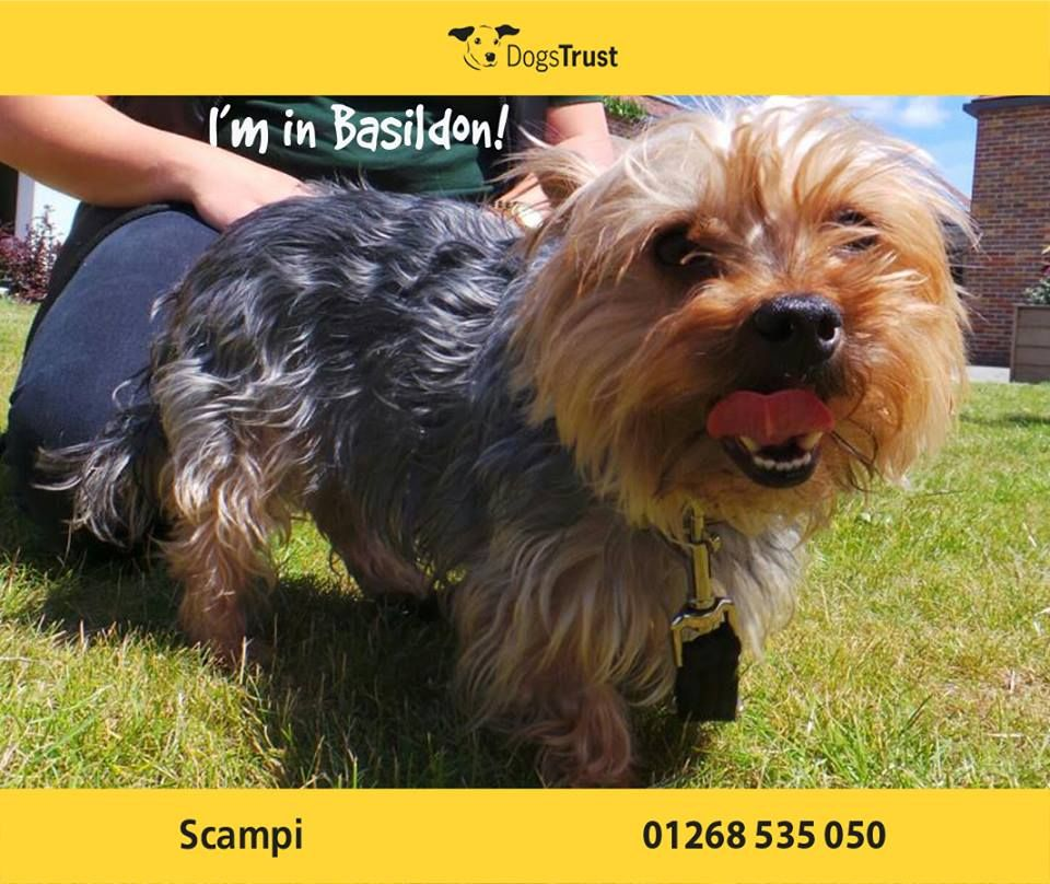 Scampi At Dogs Trust Basildon Is A Super Cheeky Boy With A Big