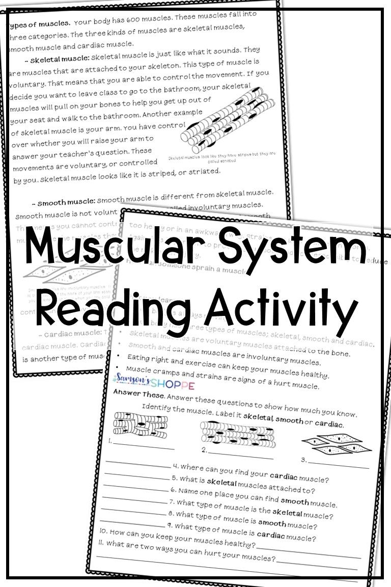 Muscular System Reading Worksheets Muscular System Activities Upper Elementary Resources Muscular System