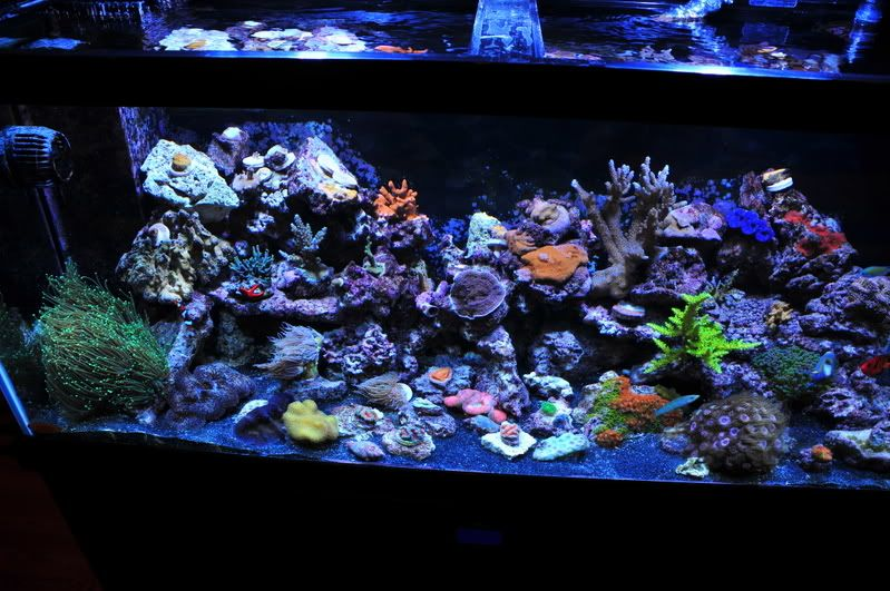 Black sand fish tank saltwater google search salt for Sand for fish tank