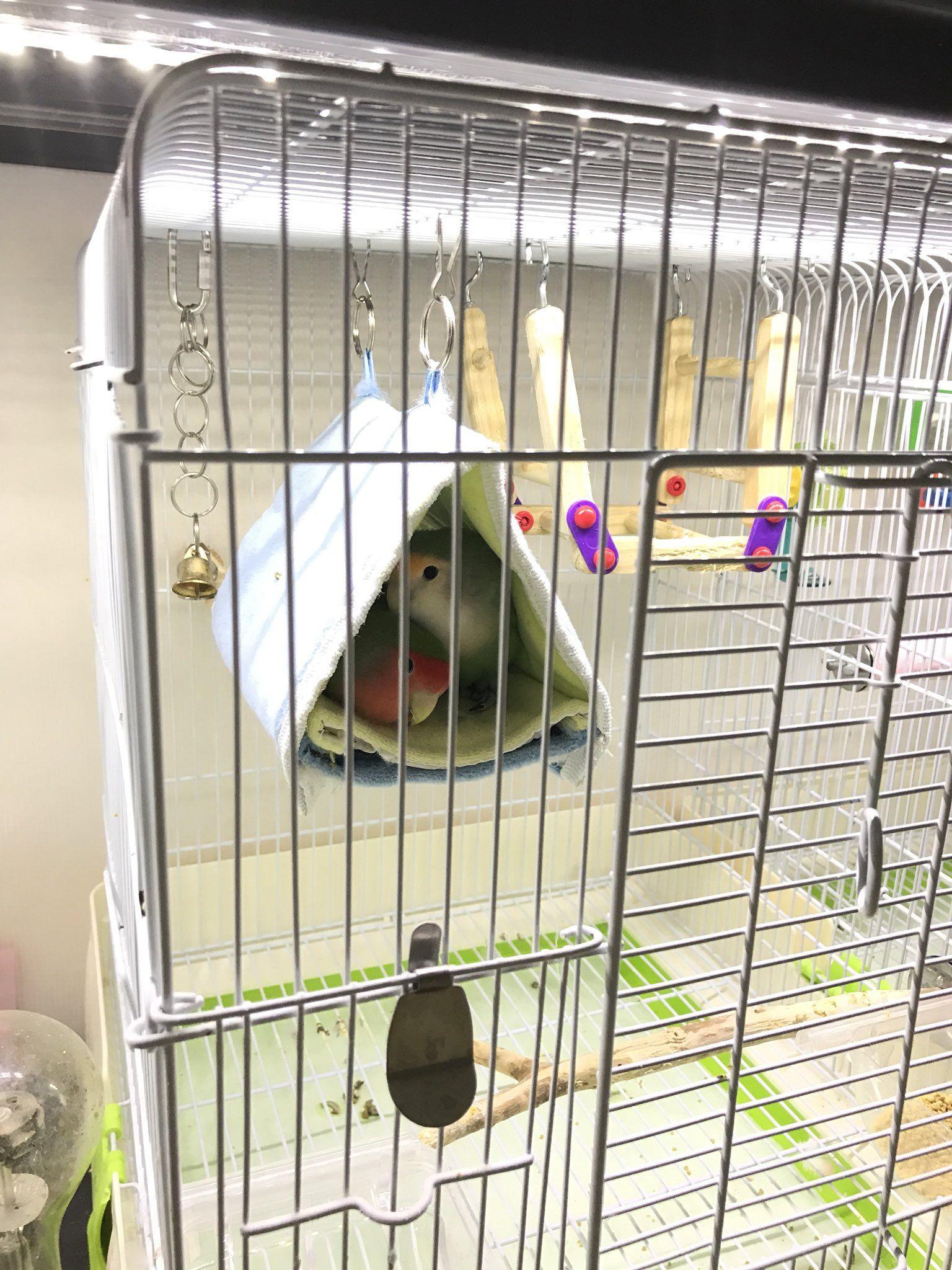 Media Tweets By とりっぴー 小鳥用品専門店 仙台 Bird Torippie Twitter 動物看護士 小鳥 愛玩動物