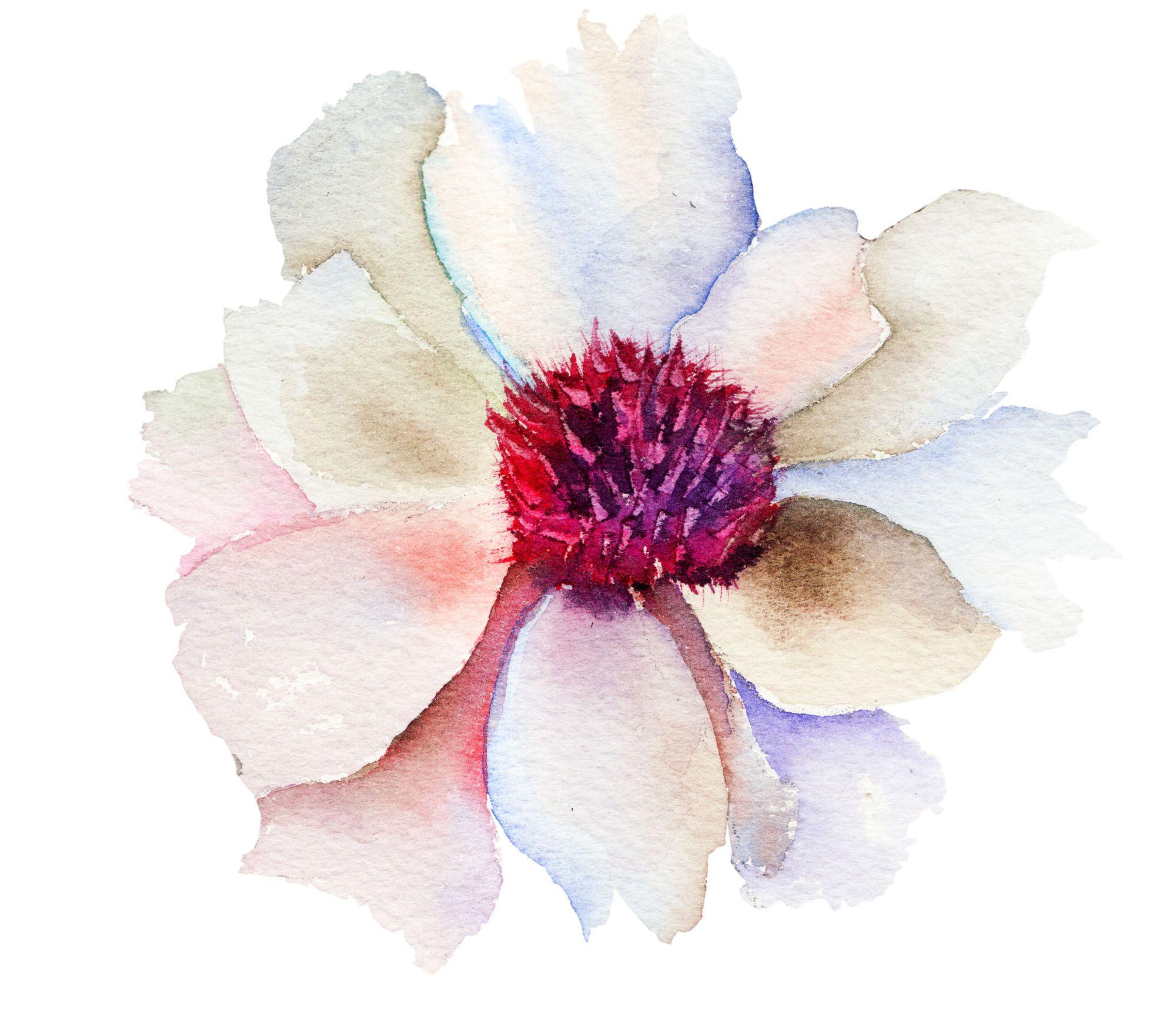 Resultado de imagen para watercolor flower png acuarela for Watercolor flower images