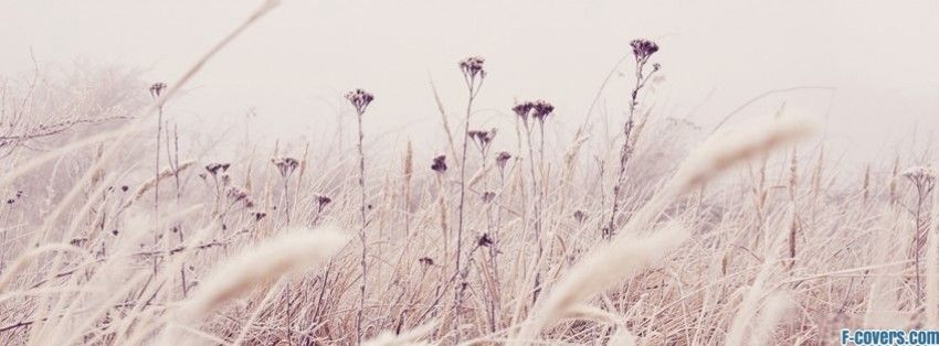 Flowers Frost Facebook Cover Nature Wallpaper Nature Wallpaper