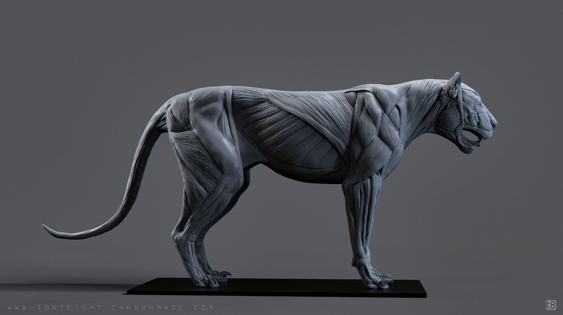Big Cat Skeleton Study Labeled by Tony Camehl TONY CAMEHL is a ...