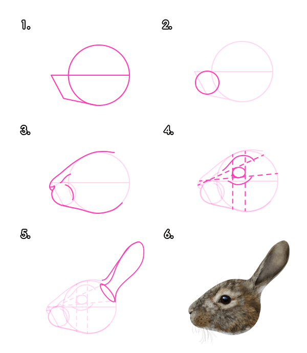 how to draw animals hares and rabbits envato tuts design